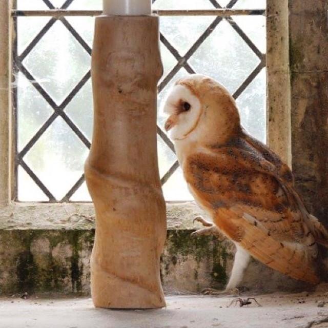 Owl in Sutterby church
